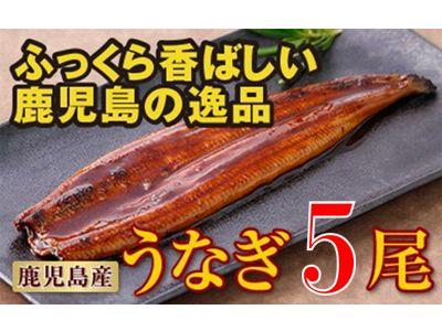 鹿児島産特上うなぎ5尾!