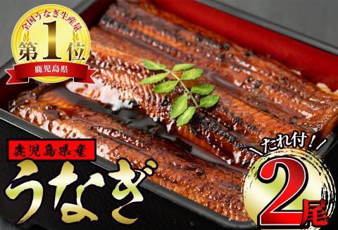 うなぎの蒲焼(150g以上×2尾)